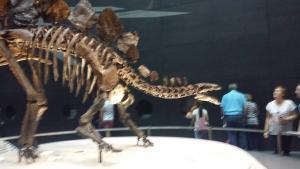 Stegasauros/Snarl