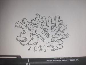 Inktober 2020 Day 20: Coral