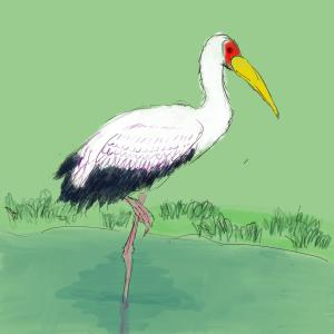 Yellow-billed stork #sketchdaily 77/365