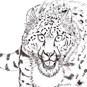 Snow leopard #sketchdaily 86/365