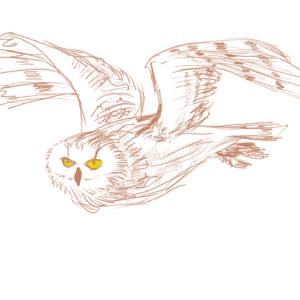 Owl #sketchdaily 128/365