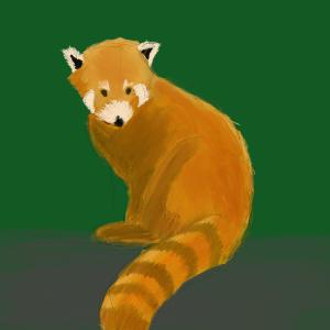 Red panda #sketchdaily 216/365 PHOTOS PLACEHOLDER